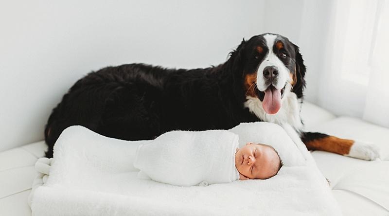newborn baby saskatoon photographer